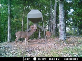 Gswitch deer3.jpeg