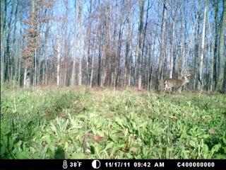 Gswitch deer2.jpeg