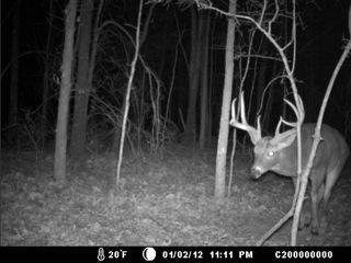 Gswitch deer.jpeg