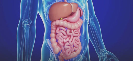 annals-of-gastroenterology-and-the-digestive-system.jpg