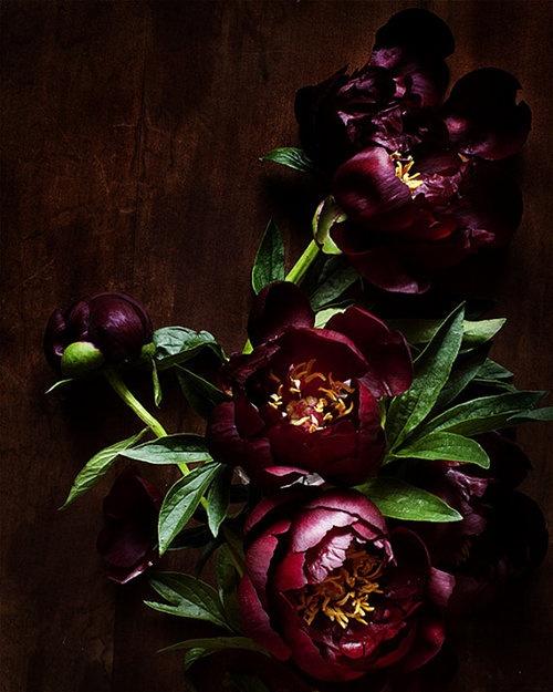 burgundy flowers.jpeg