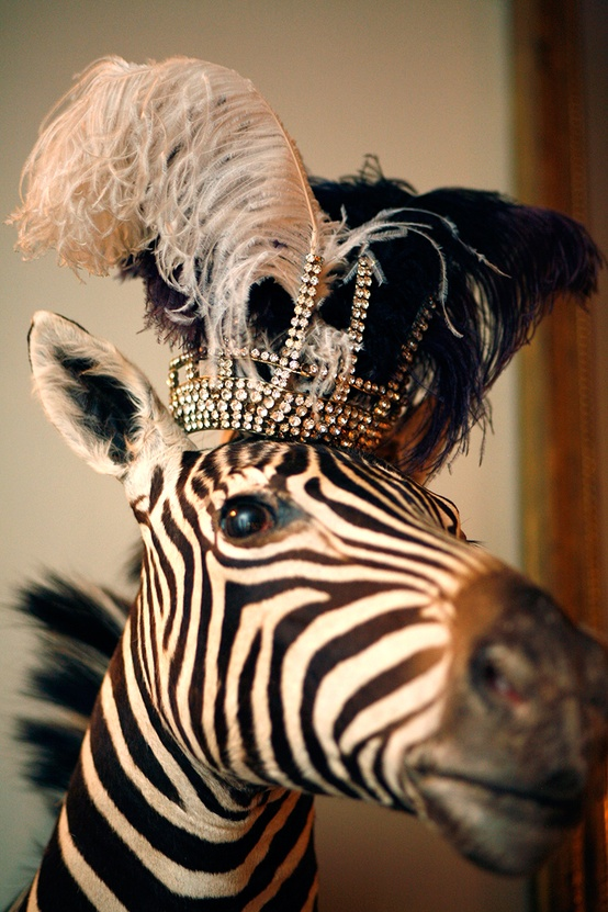 zebra with crown.jpg