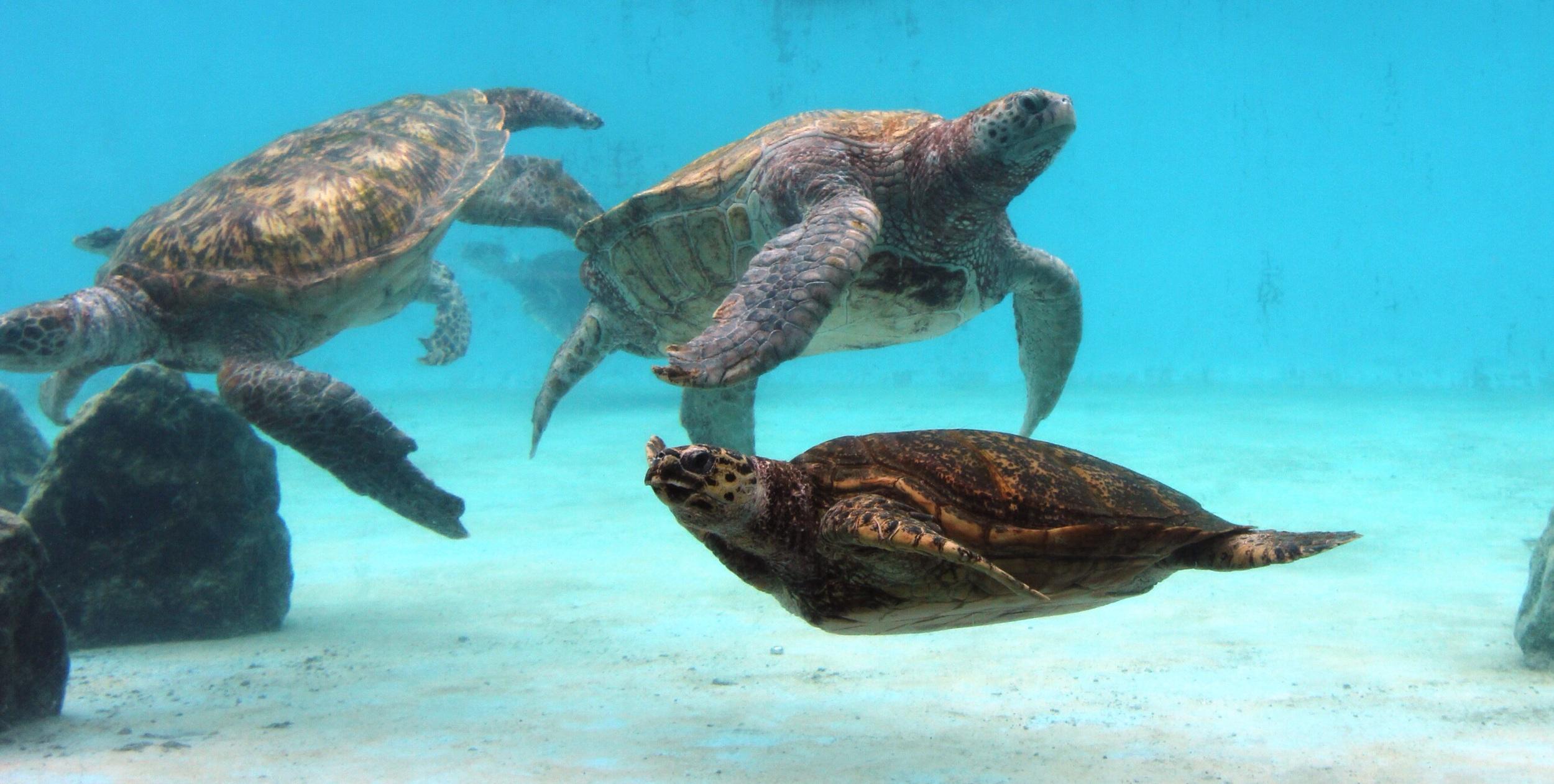Sea turtles at the aquarium.