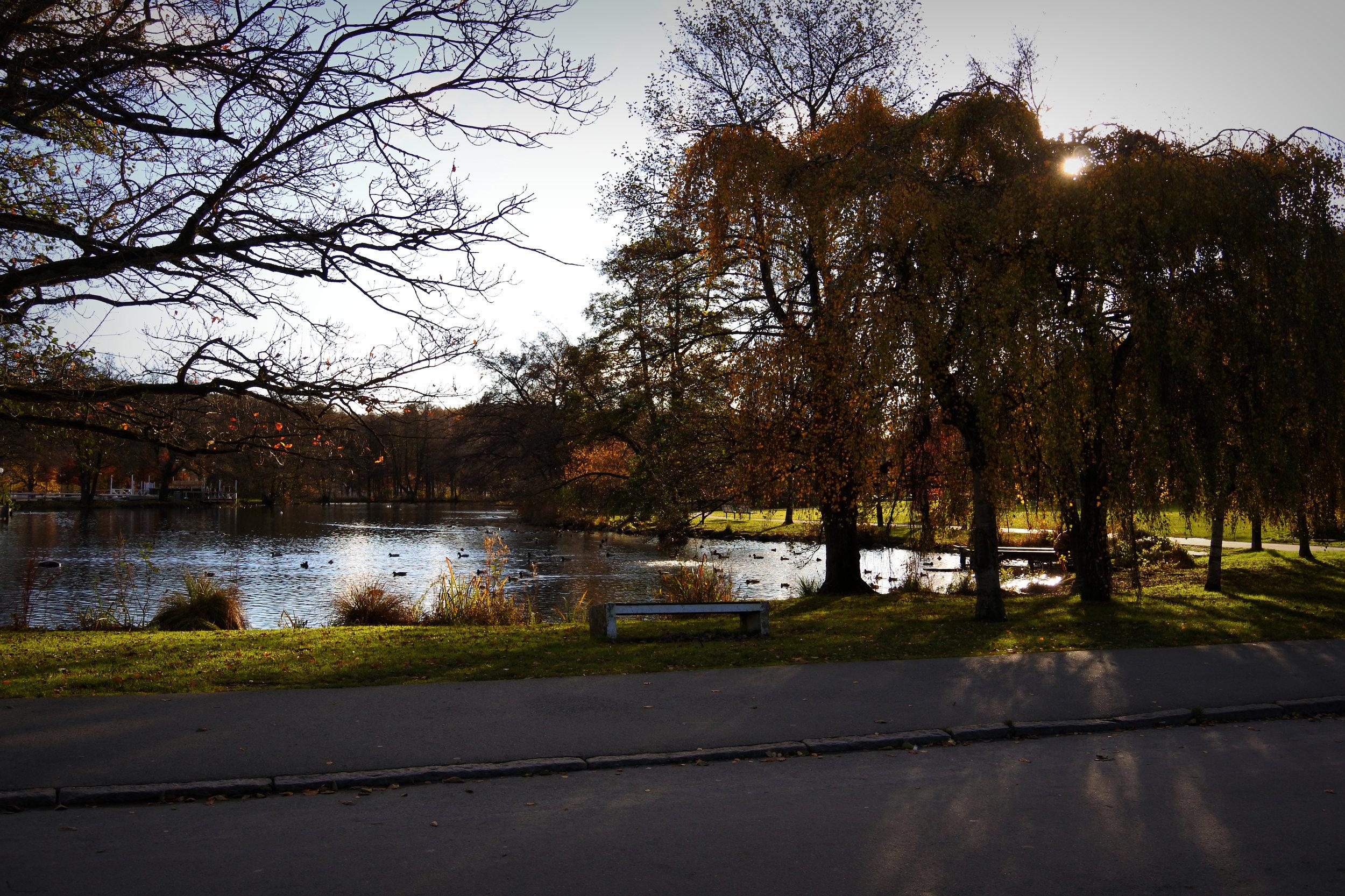 Slottsskogen - think a Swedish version of Central Park.