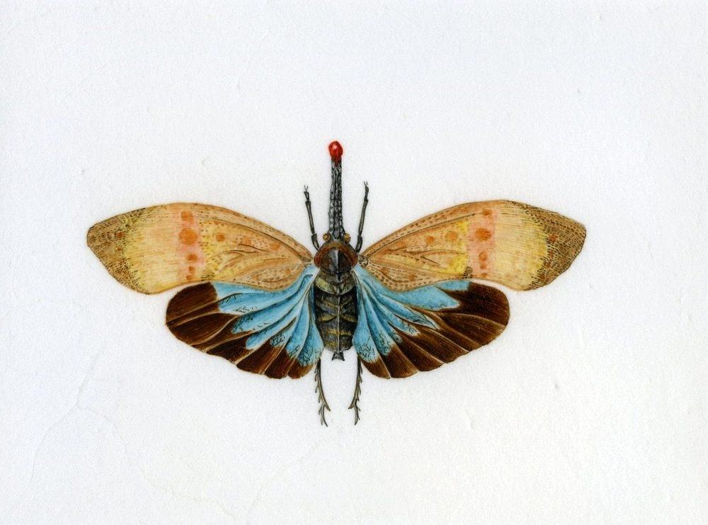 Lantern Bug - on vellum