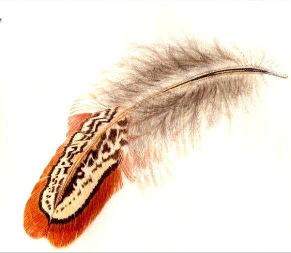 Pheasant Feather - on vellum