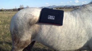 Pony Pillow heating the lumbar region of a horse