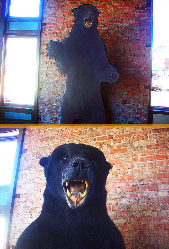 5. bear_oct18-17.jpg