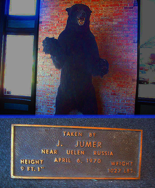 7. bear_may17-18.jpg