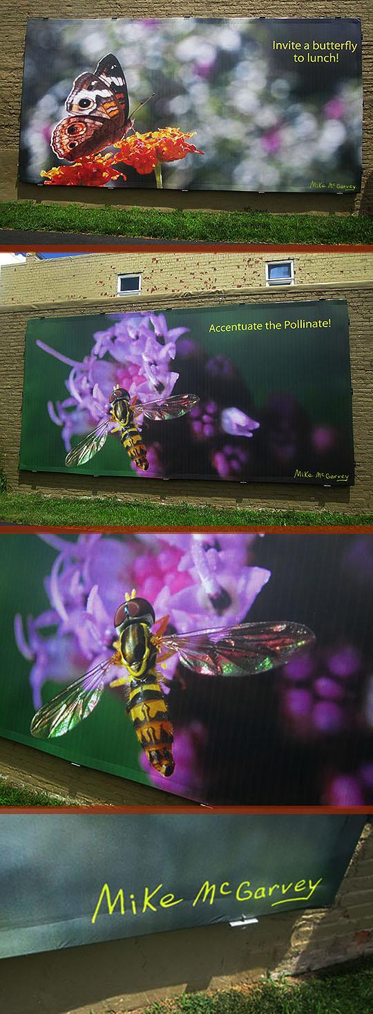 8. butterflybee_7-17-19.jpg