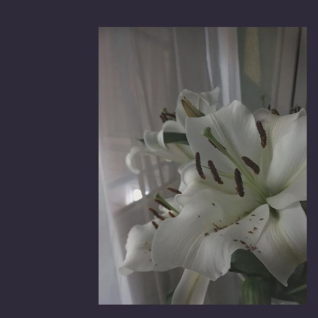 outside snow is falling like lily pollen settled overnight on its own petals
