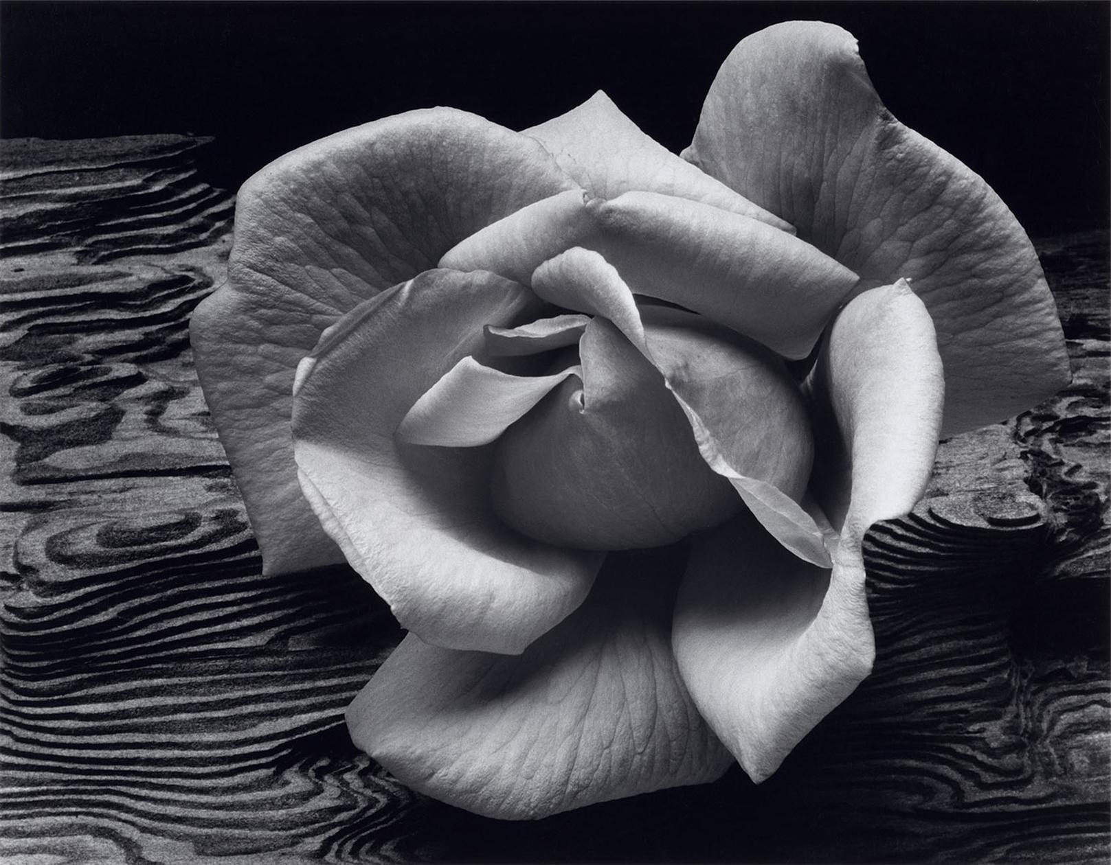 Rose-and-Driftwood-1617x1260 - Ansel Adams.jpg