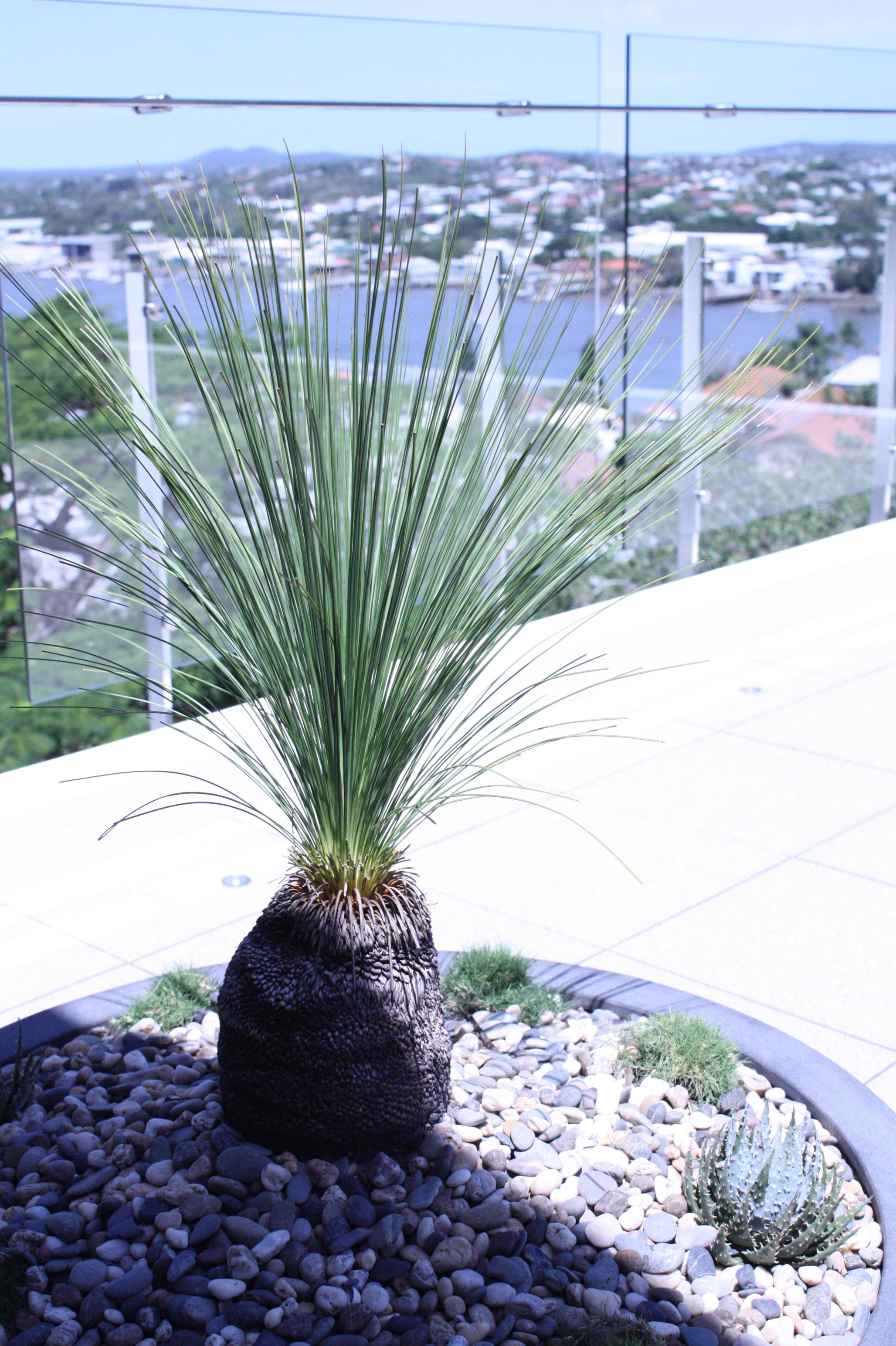 hamilton-rooftop-landscape-design-SEED1.JPG