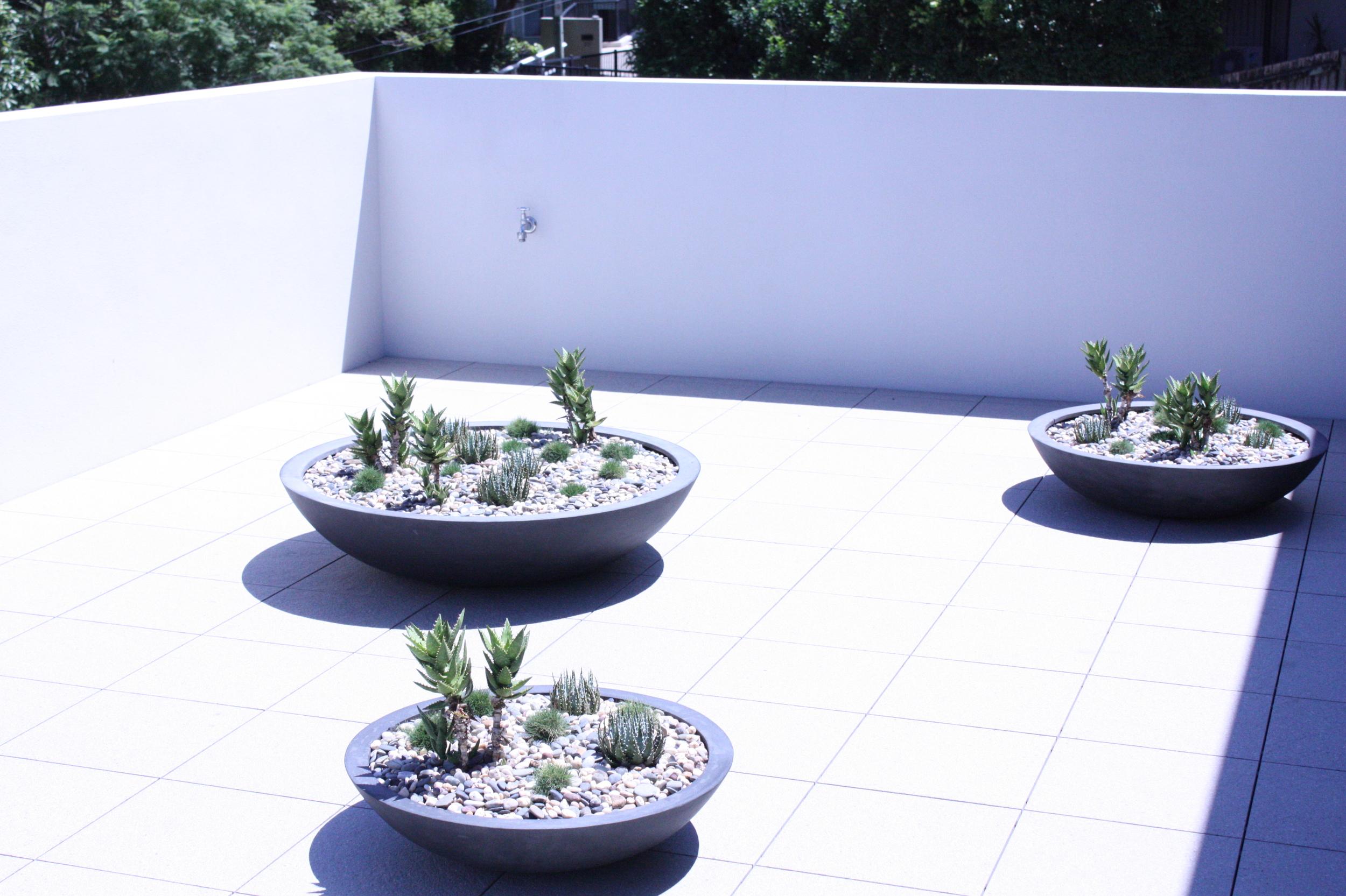 hamilton-rooftop-landscape-design-SEED7.JPG