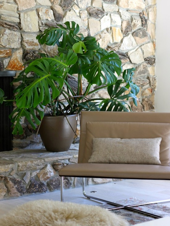 The 6 Best Indoor Plants For Brisbane Homes — SEED Landscape