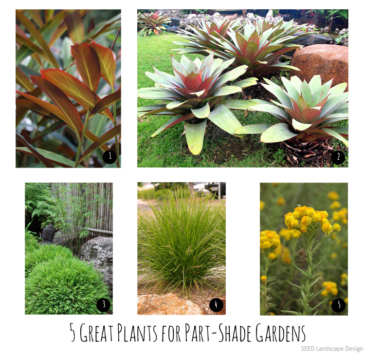 5 Great Plants For Part Shade Gardens In Brisbane Seed Landscape Design