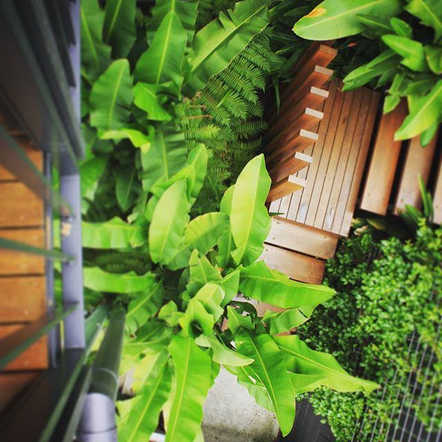 Stairs hidden in urban jungle #seedlandscapedesign  #difficultaccess #subtropicalplants