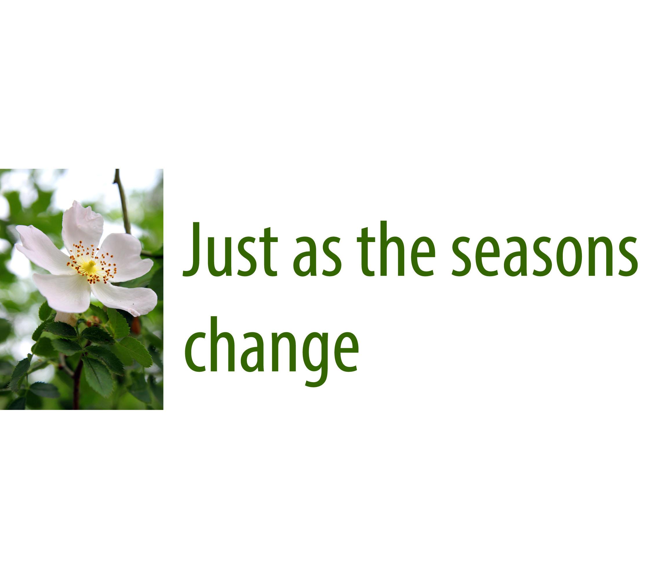 Lynn'sChoice1_0003_Just as the seasons change C .jpg