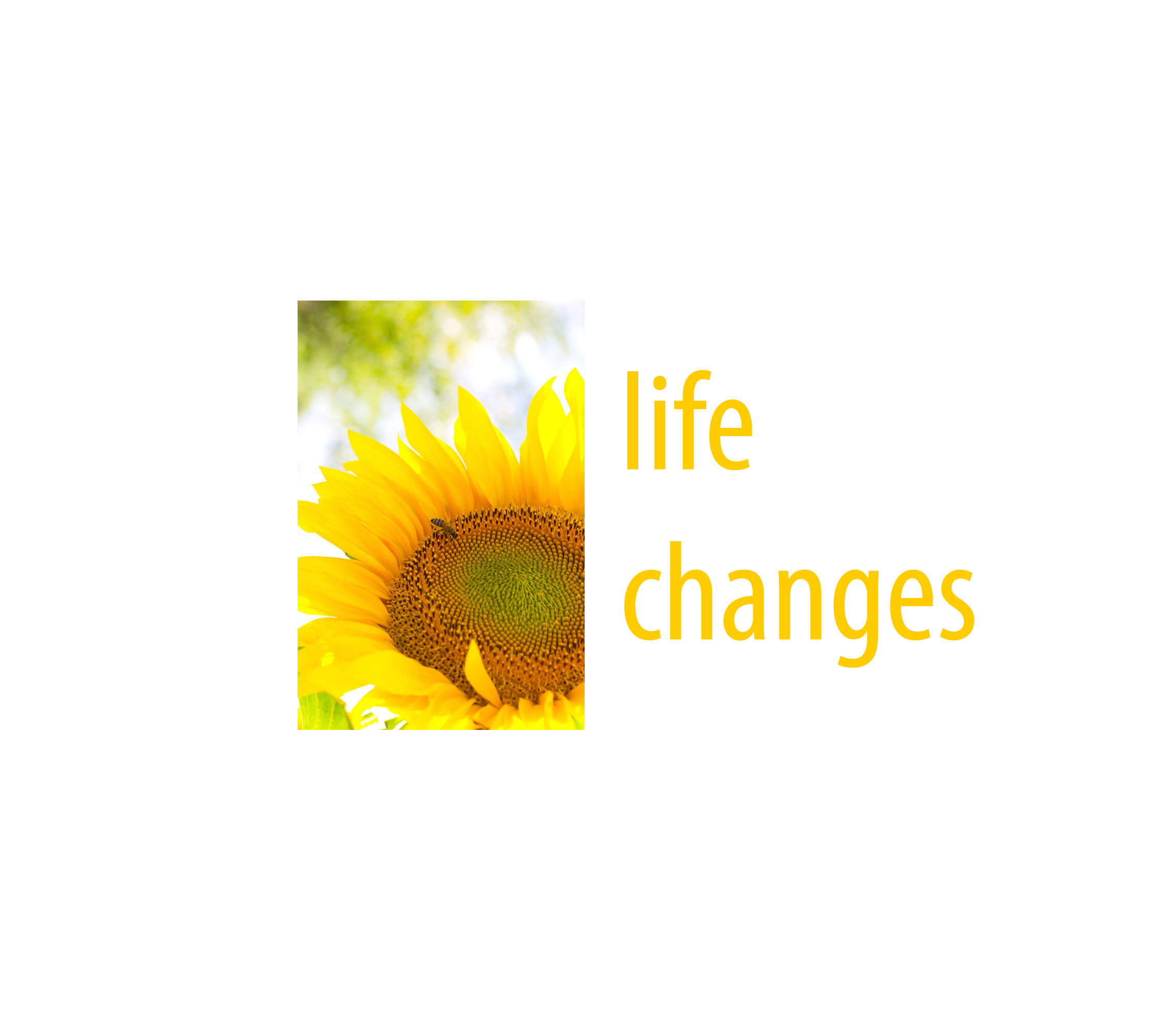 Lynn'sChoice1_0002_life  changes.jpg