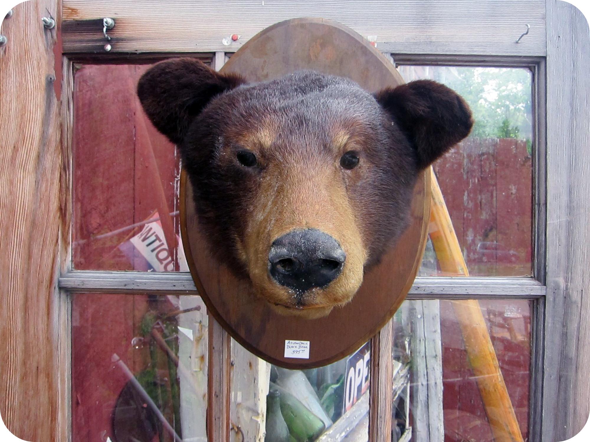 bear head.jpg