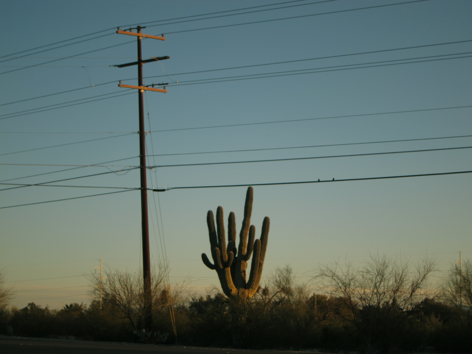 The Tucson landscape—cactus in the setting sun.
