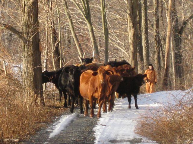 cowhand.jpg