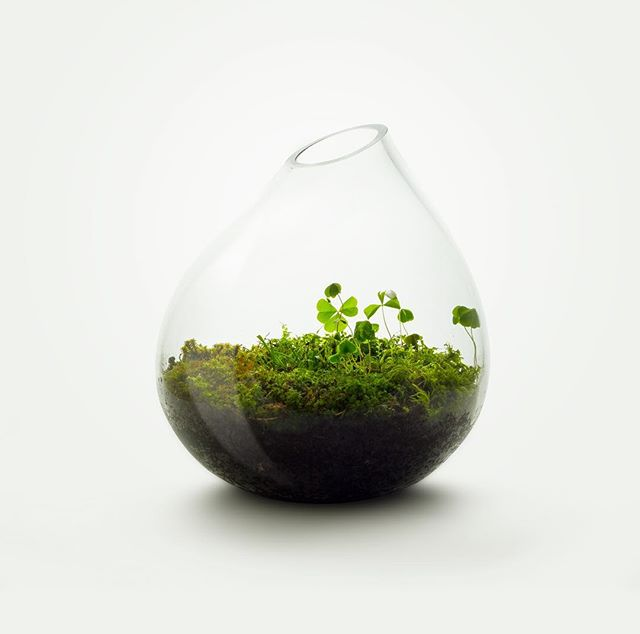 Džiaugiamės galėdami pristatyti mūsų naują produktą - vazą, skirtą miško mikroekosistemai sukurti savo namuose 🌱🌱 Daugiau informacijos: www.soiree.lt/naujienos/