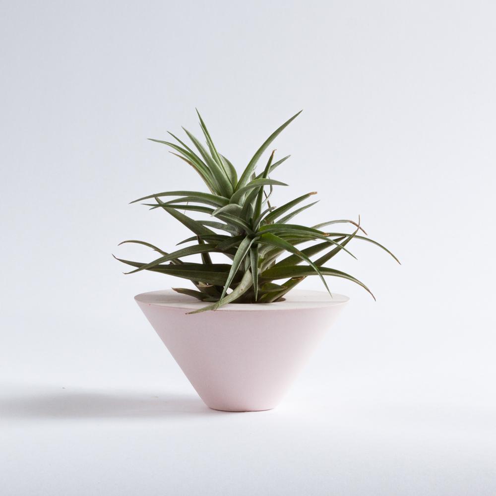 AIR PLANT CONE [PINK] + TILLANDSIA   Sukurtas išskirtinai oriniams augalams, geometrinės formos indas pagyvins bet kokią erdvę.  Dydis: 6cm x 11,5cm  Kaina: