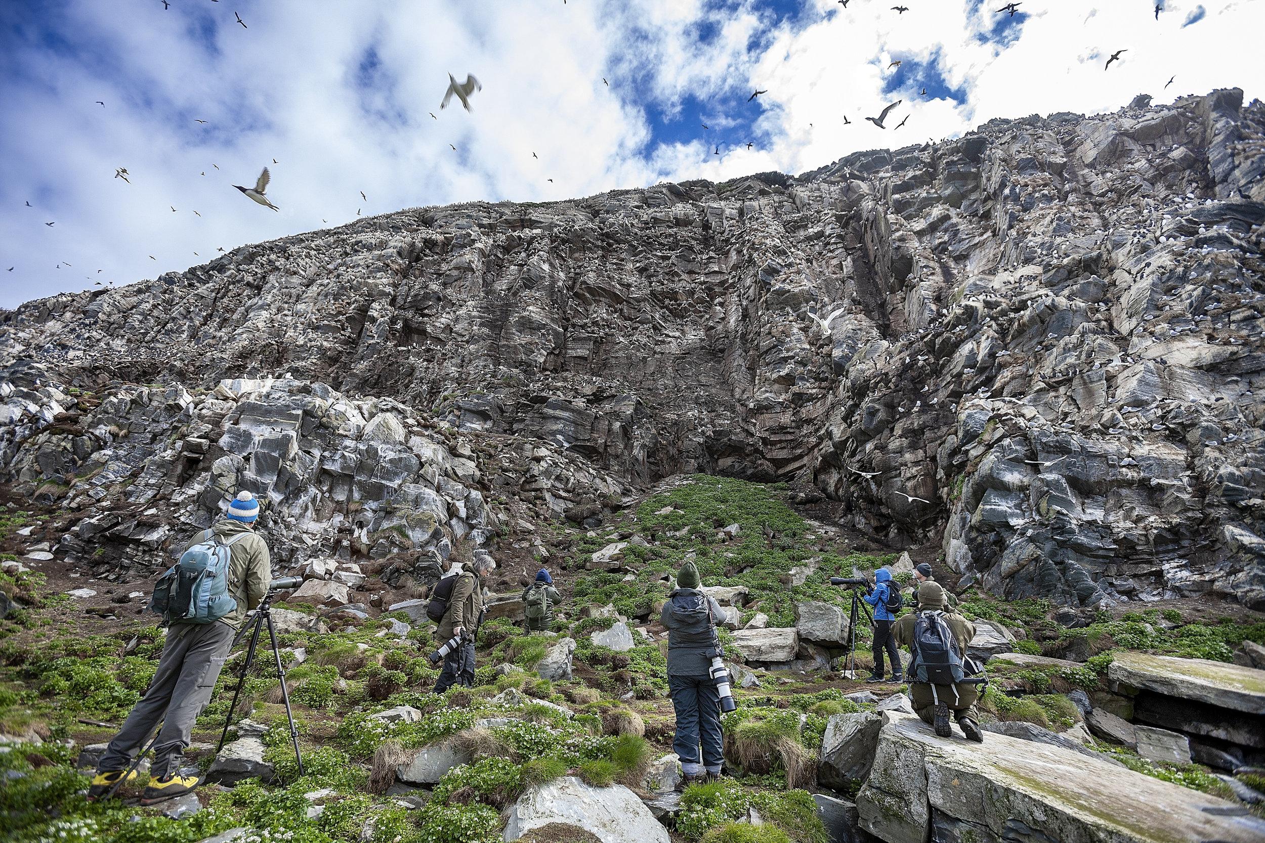 LANGVEIS: Turistene kommer langveis fra for å se fuglelivet i Varanger. På Hornøya kan du se lomvi, alke, lundefugl, toppskarv og polarlomvi. Er du heldig, ser du også jaktfalken i aksjon.