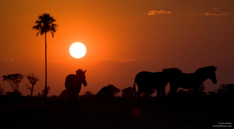 Botswana-Africa-5880.jpg