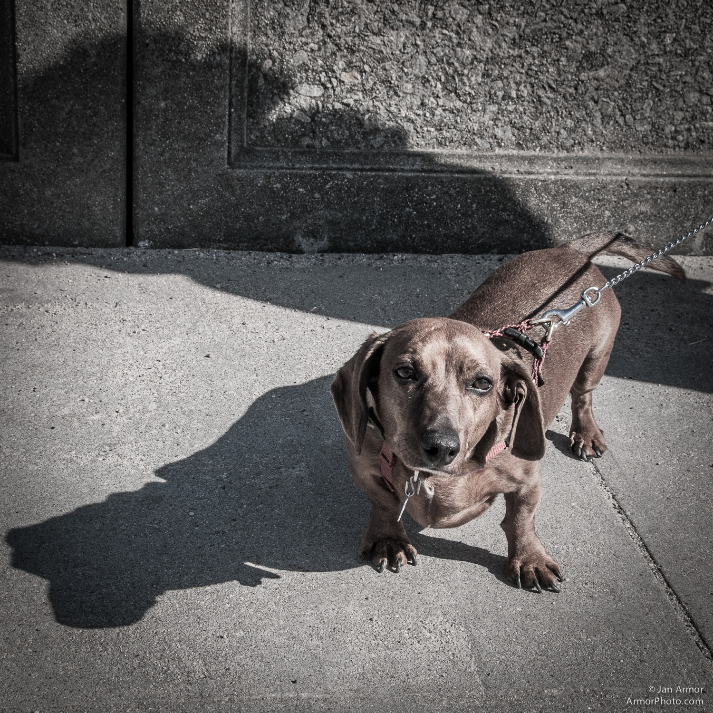 dogs-0199.jpg