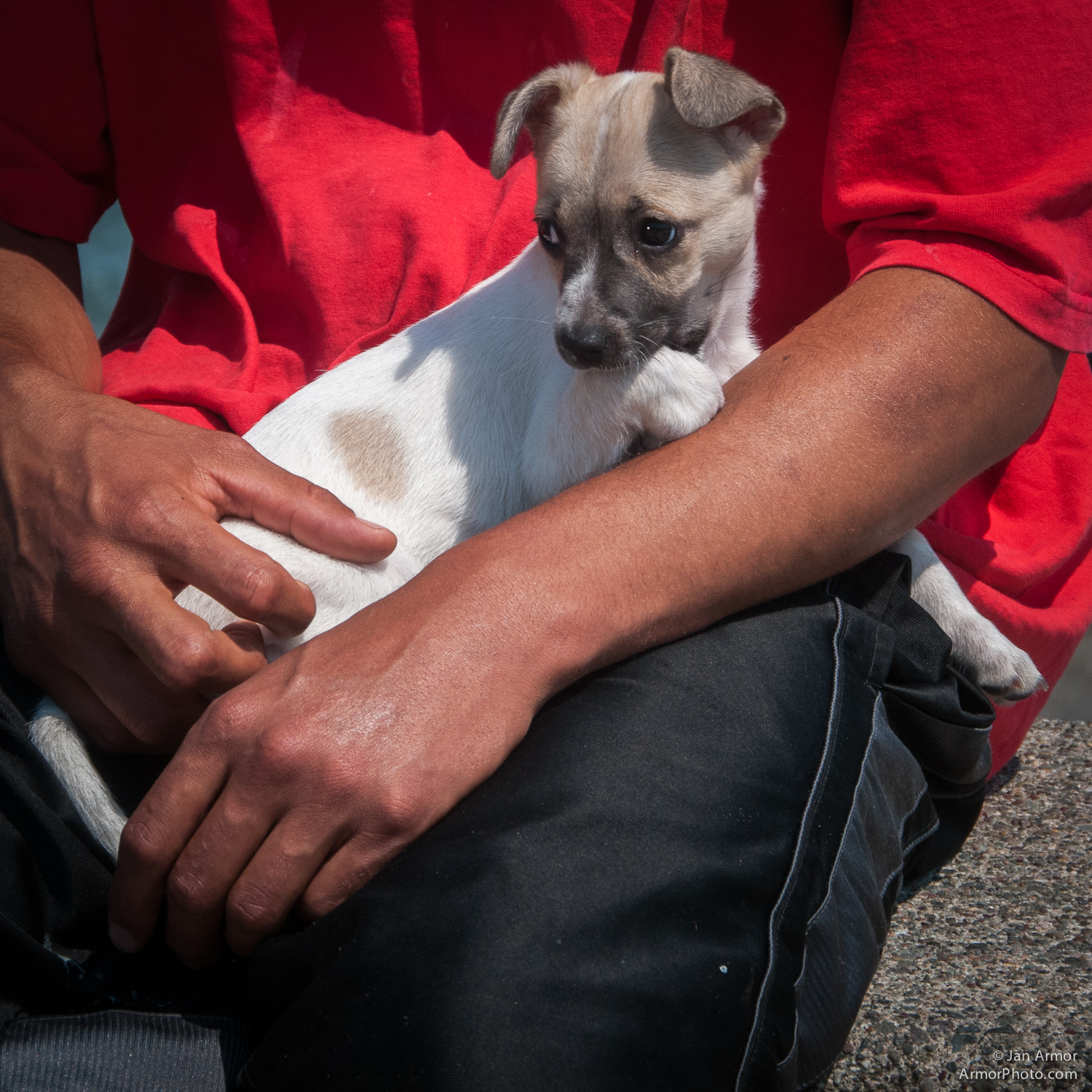 What Everybody Ought to Know About Mexican Chihuahua Dogs.