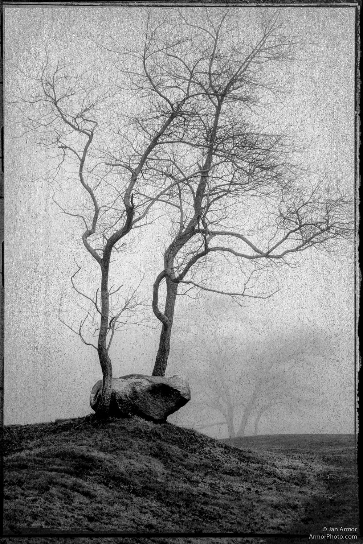 Foggy day trees in Narragansett.