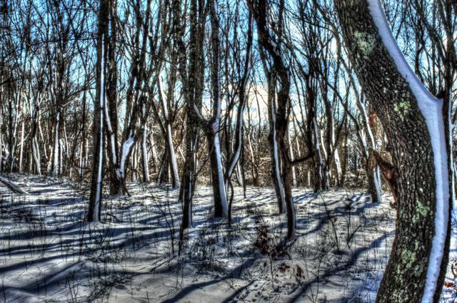 conochet trees.jpg