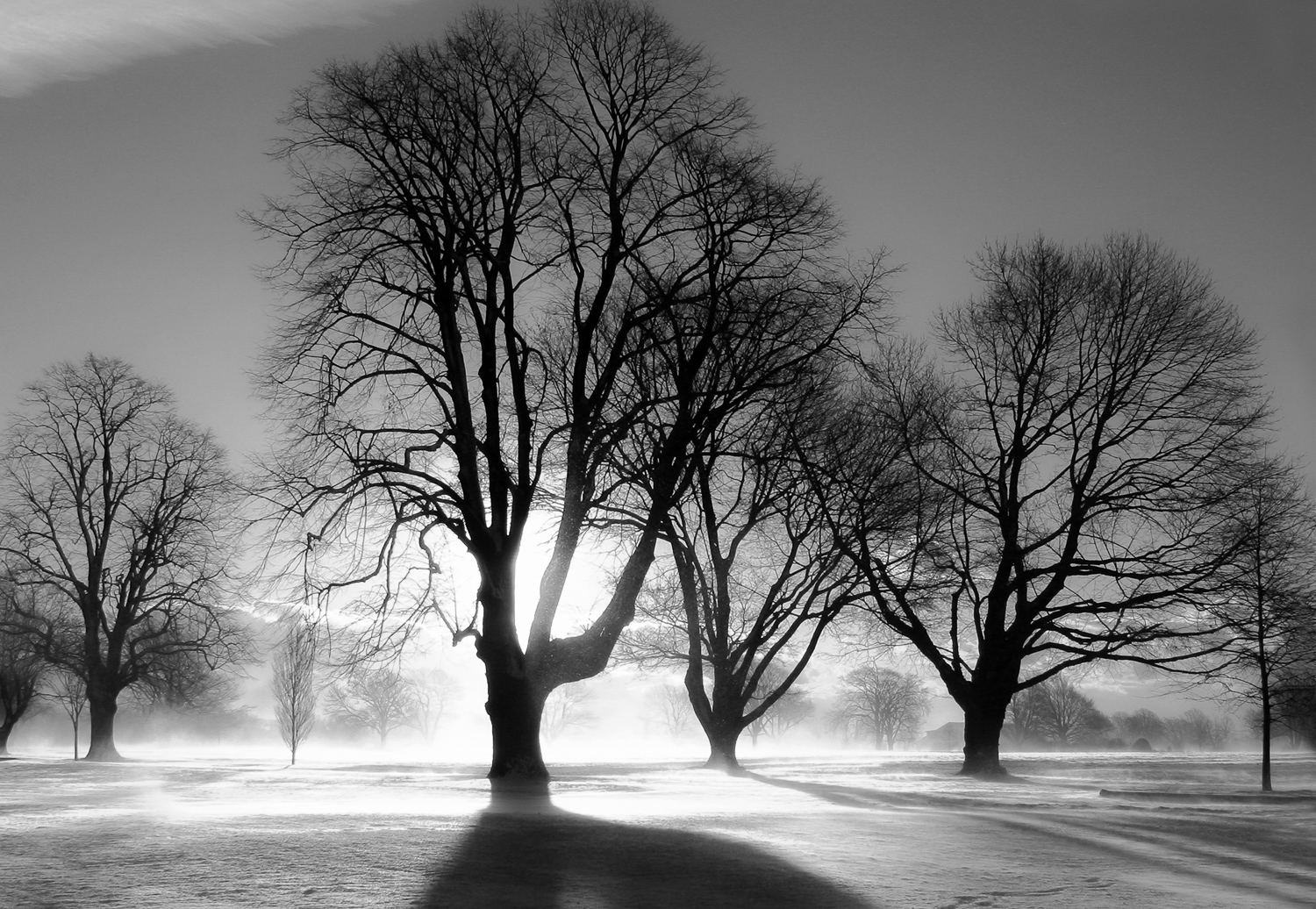 Beeches - Portsmouth