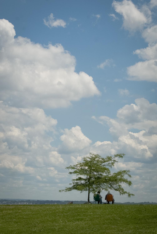 Shade Tree - Bristol