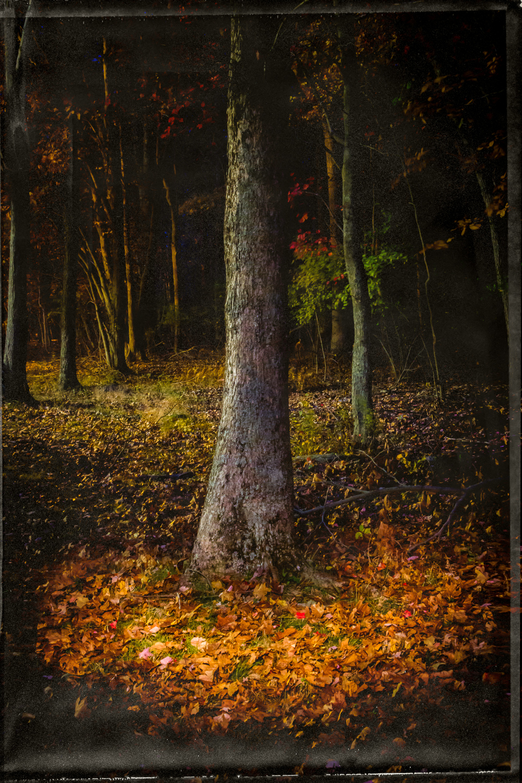 Night Trees - Kingston