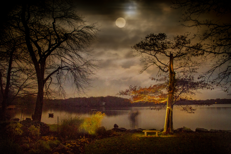 Swamp Oaks on Halloween - Wakefield