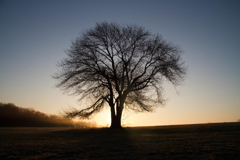 The The Tree on Windmill Hill - Jamestown