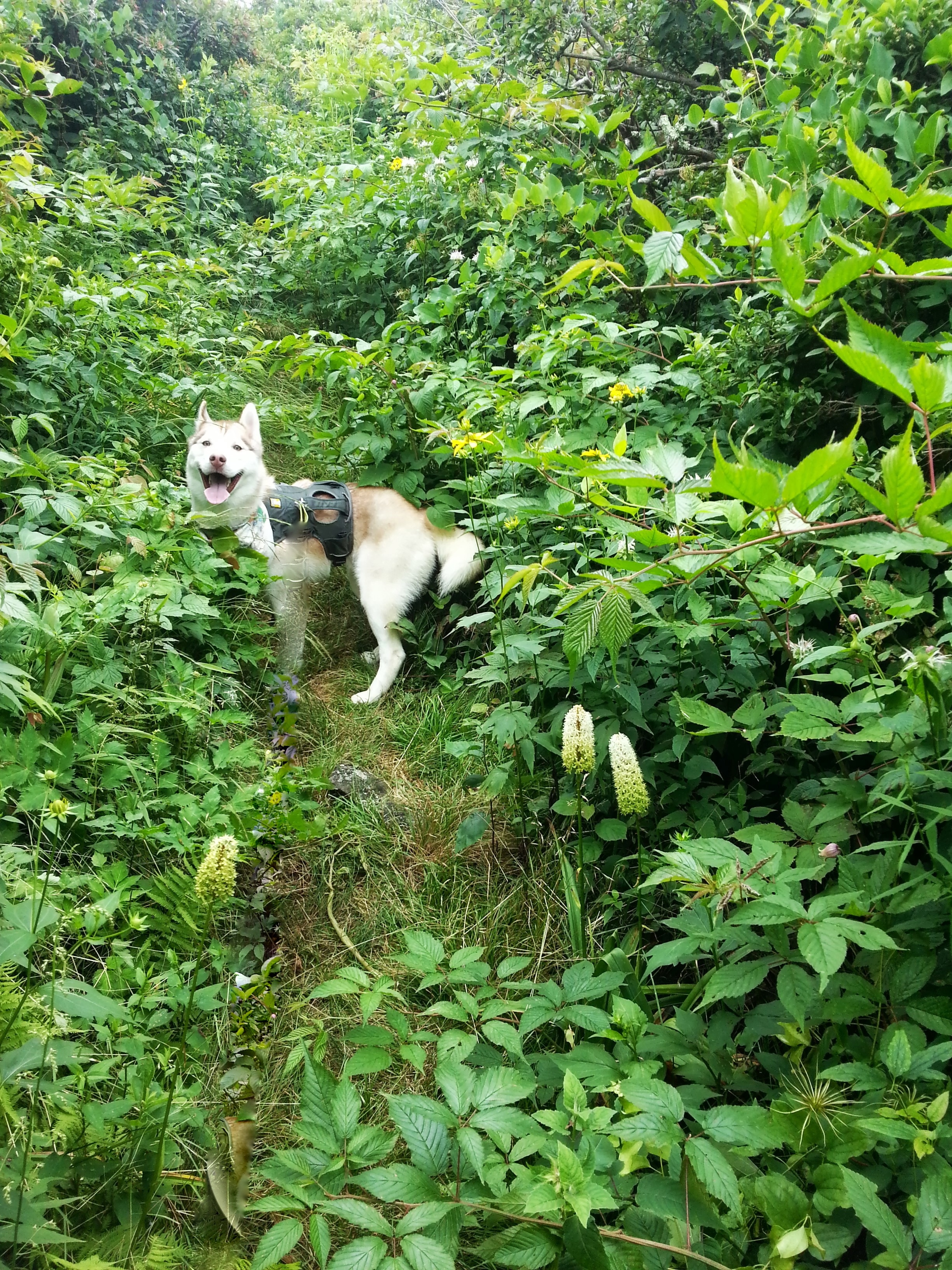 The trail was badly overgrown and at times plant tendrils seemed to reach out and swallow Ryder.