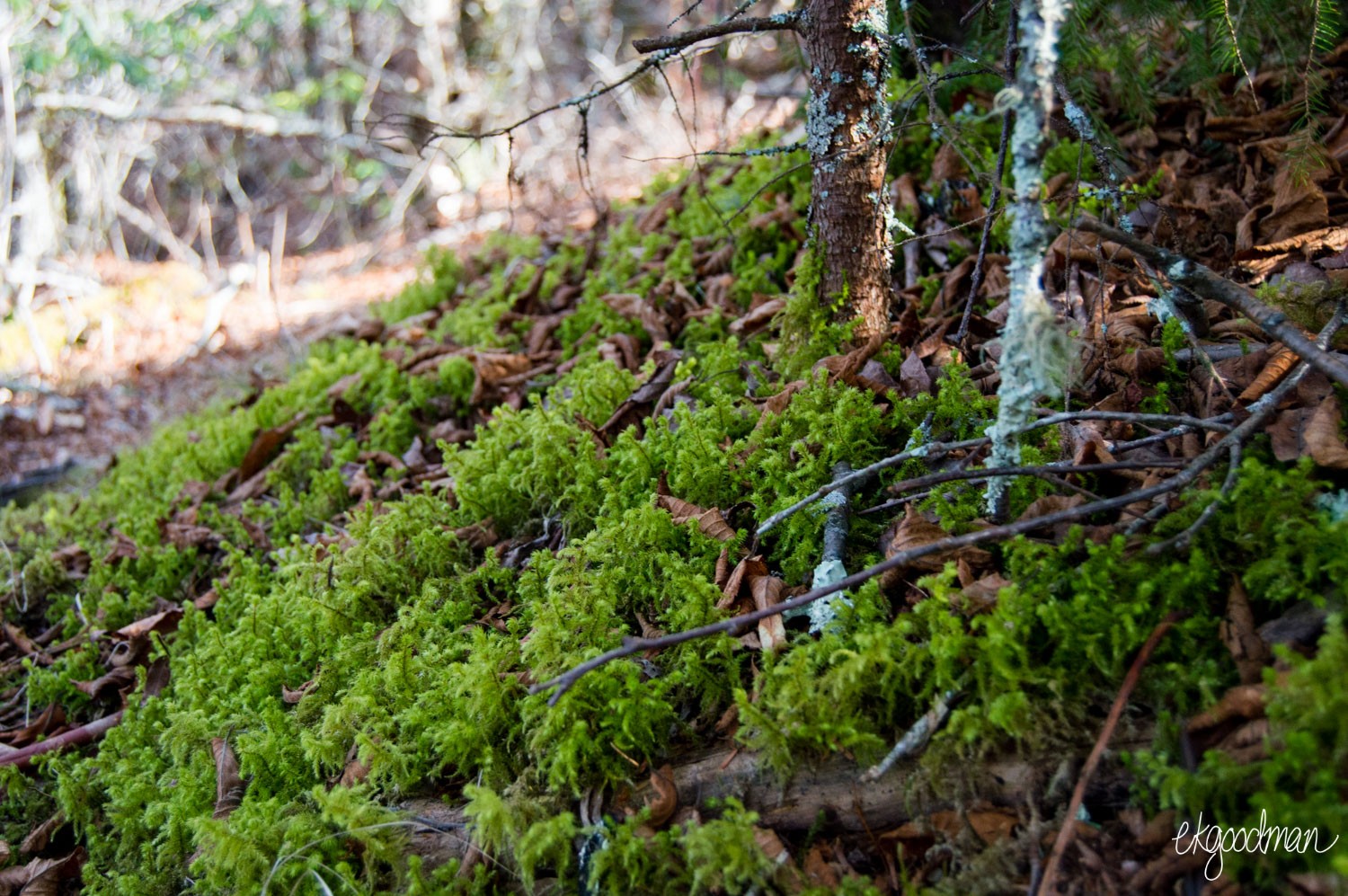 Moss on Cold Mountain