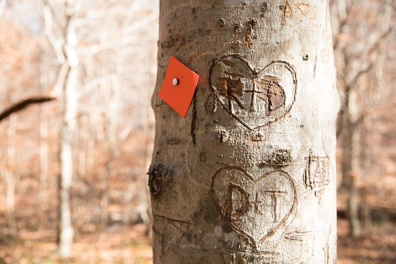 Umstead State Park - Pott's Branch