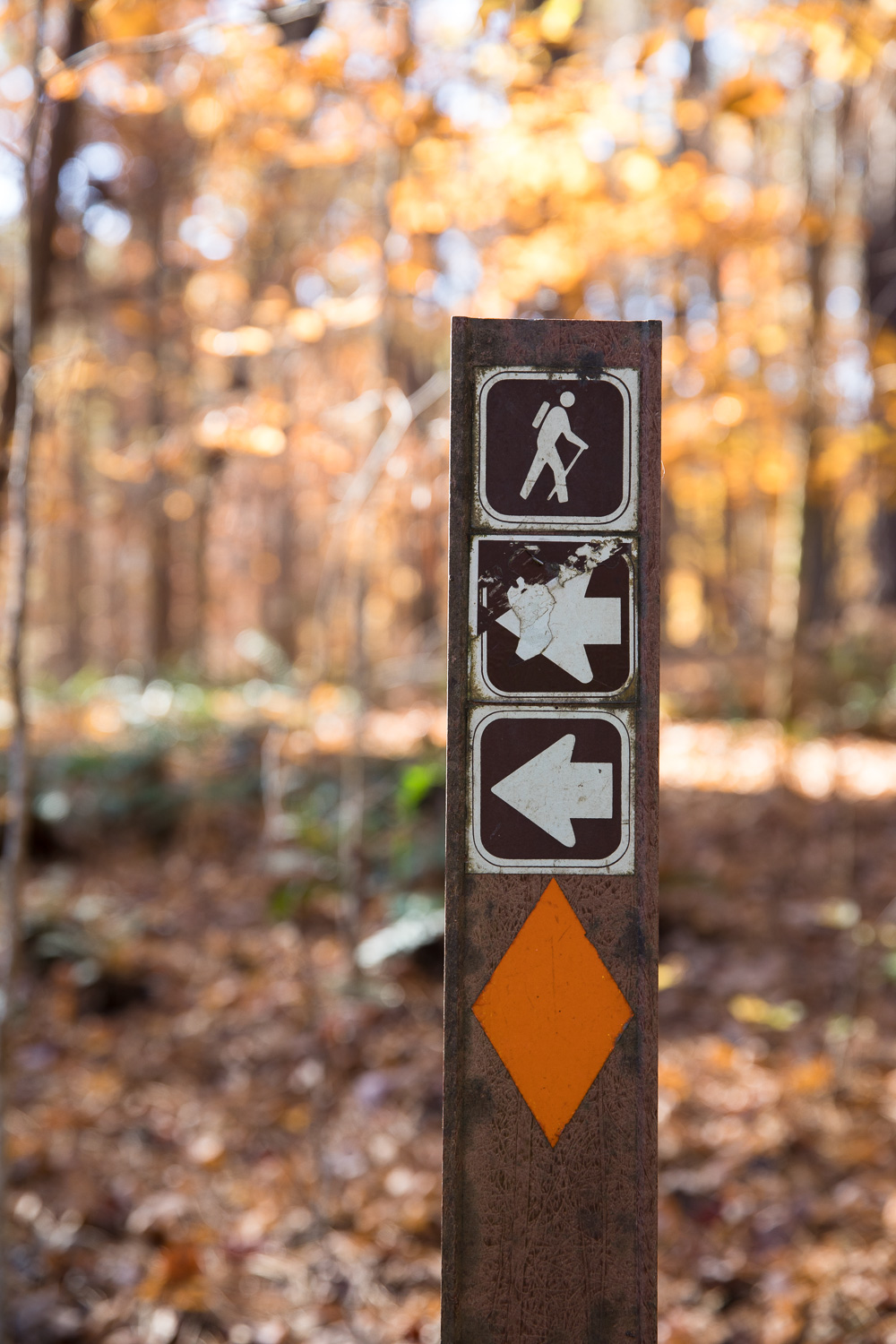 Umstead State Park - Pott's Branch Trail