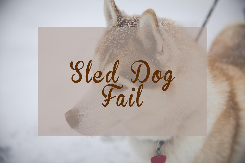 Sled Dog Fail