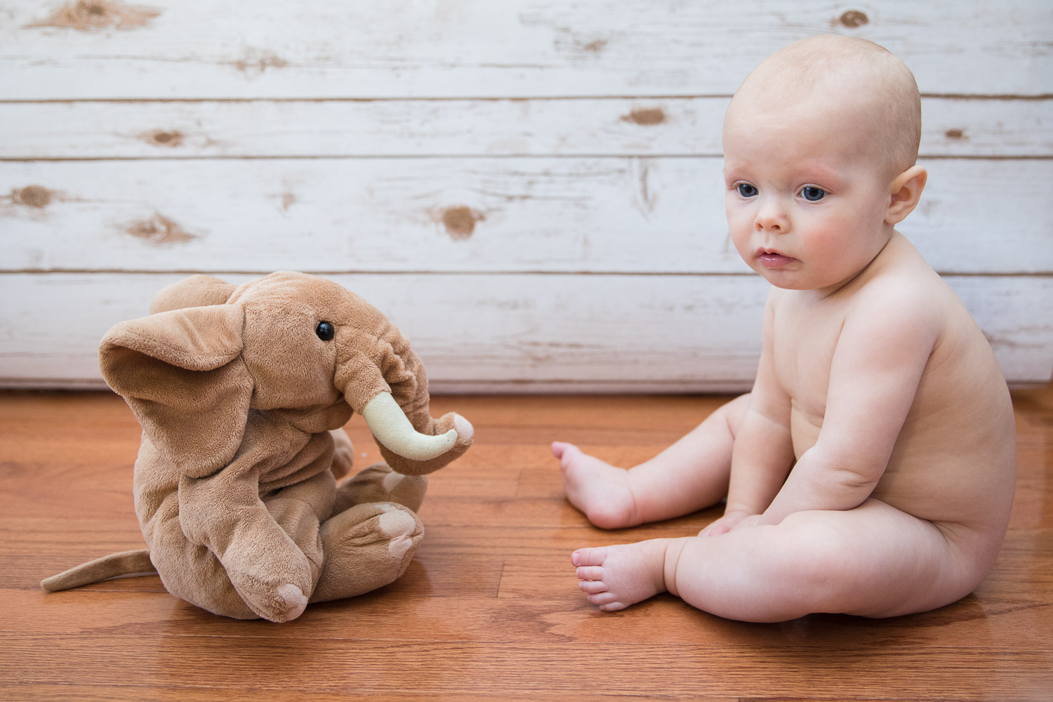 """""""Sigh. This is my life now. I'll just sit here and ignore the elephant in the room."""""""
