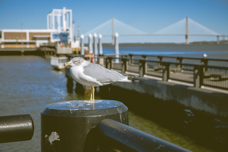 Charleston-6.jpg