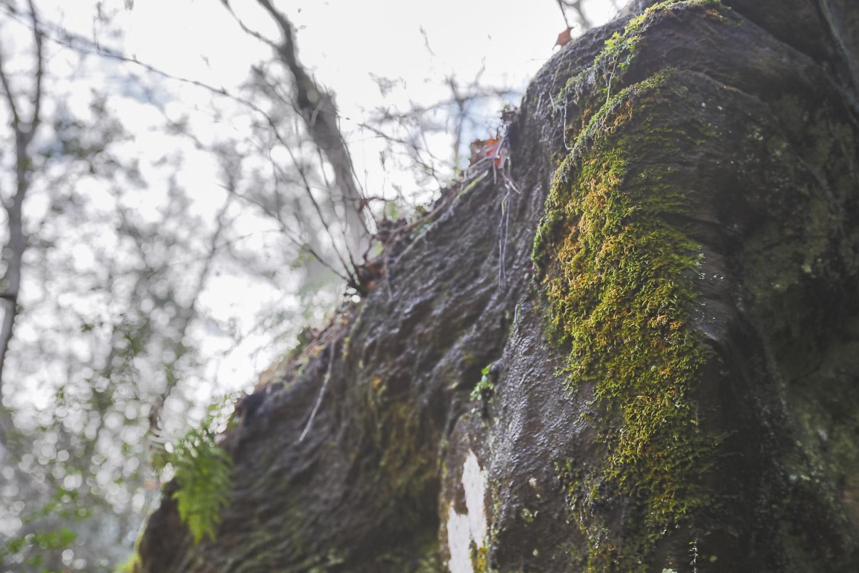 We'll be moving really slow. Like, moss-growing-on-rocks kinda slow.