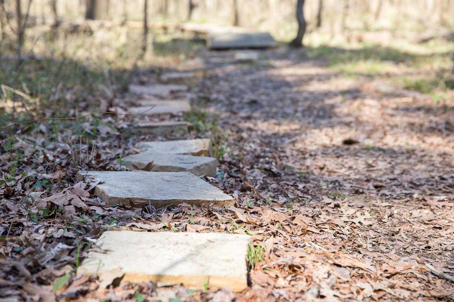 New Hope Bottomlands Trail
