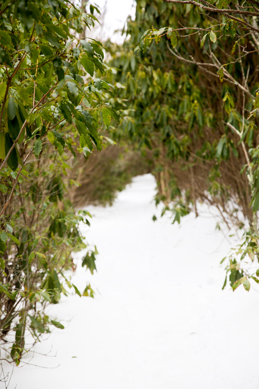 """The """"green tunnel"""" was totally transformed under snow."""