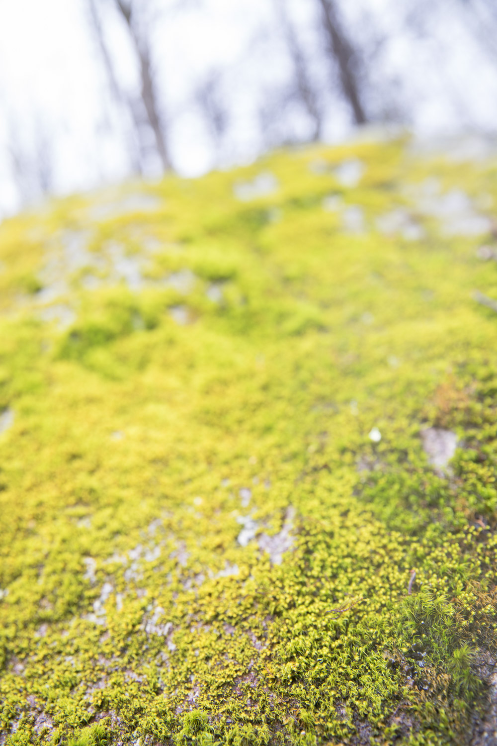 Moss grows on a stone